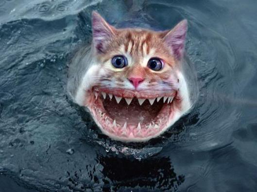 catfish_zps46c073bf
